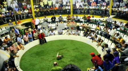 Cockfighting-Tour-Cartagena-Bachelor-Party-4